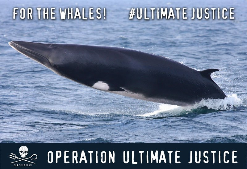 RT @SeaShepherdSSCS: Sick of whalers breaking the law?Support #UltimateJustice,our legal campaign against whaling https://t.co/x1V1o0VjUO h…