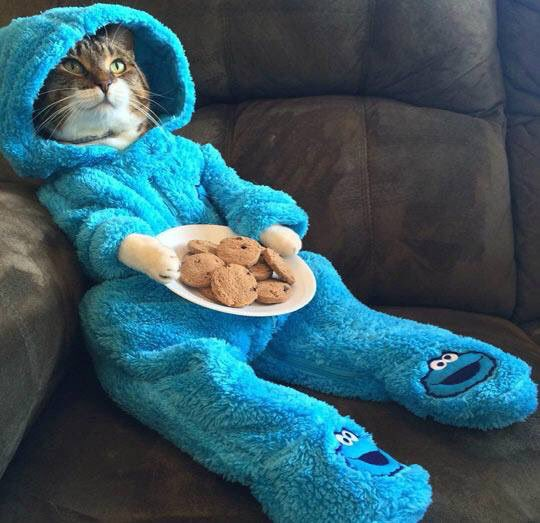 Haha this is awesome! RT @imAndyD: So... It's #NationalCookieDay ... Who wants to #CookiesAndChill ?!