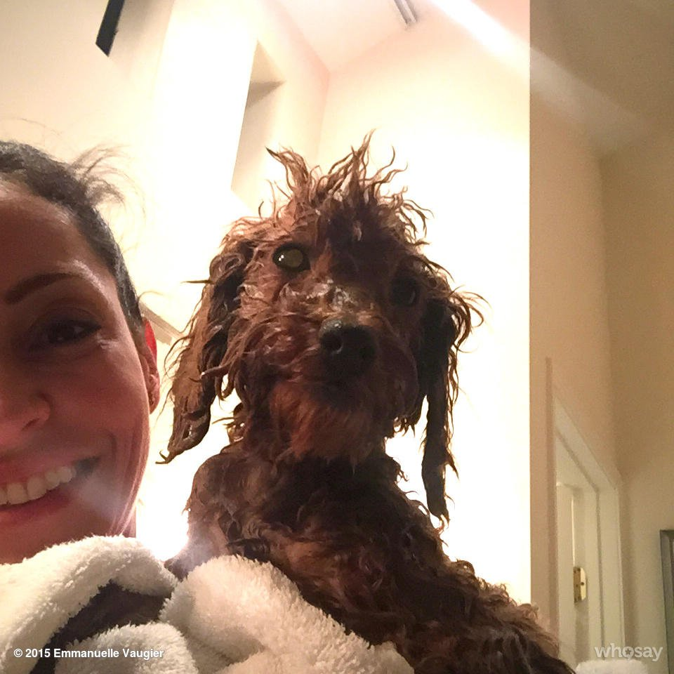 Emmanuelle Vaugier (@evaugier): Faiths first bath in America! #rescue #dogmeattrade @TheFluffball https://t.co/F0Fn0CWiCb