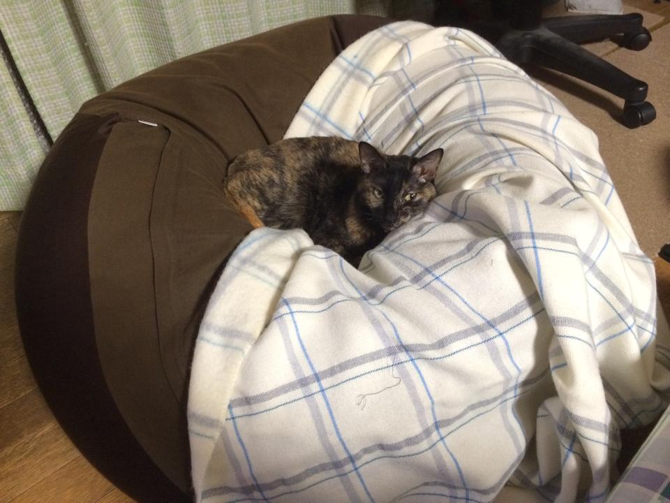 人をダメにするクッションでネコがダメになってる https://t.co/DKYwbbnpbQ