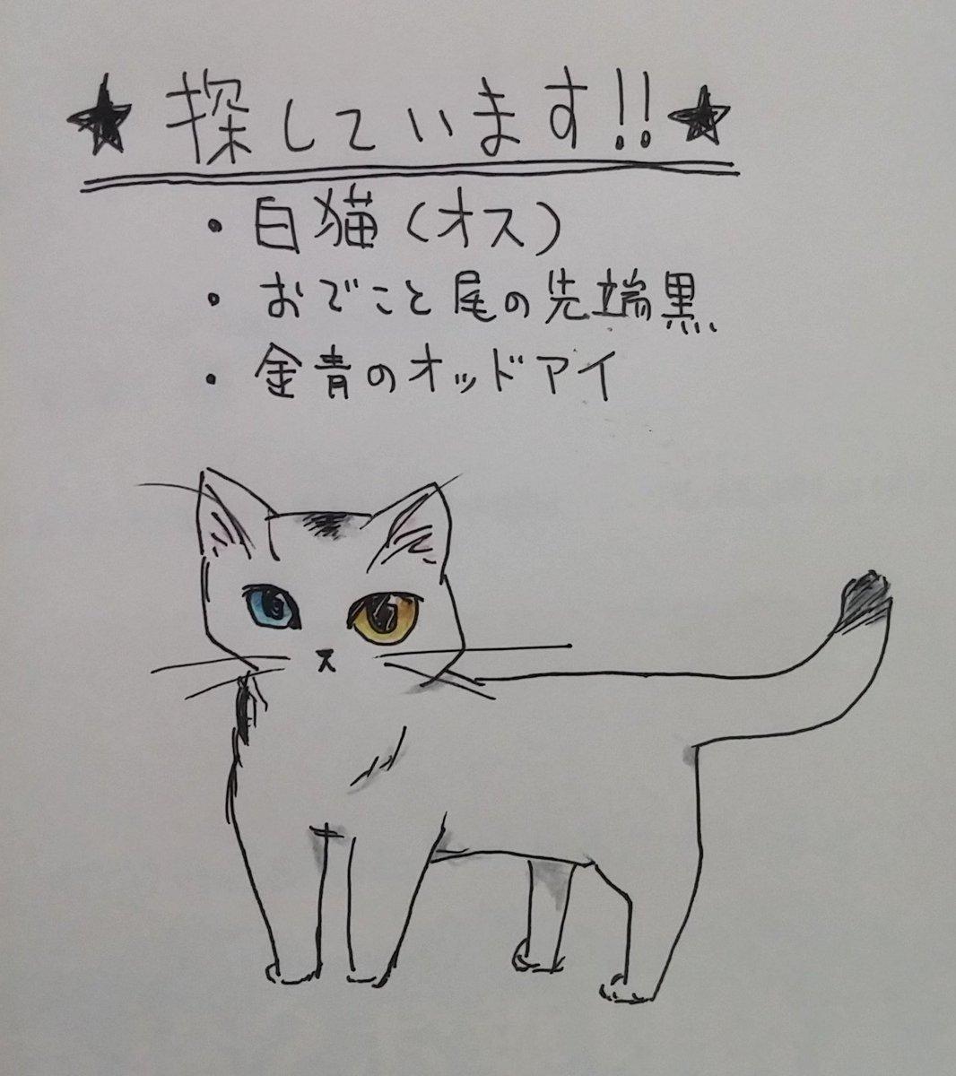 【迷い猫】千葉県松戸市大金平付近にて、小柄白猫オス(額と尾の先少し黒)、オッドアイ青金目、飼い主さんが探しておられます。情報提供お願いします。 #迷い猫 #猫 #千葉 #松戸 https://t.co/BrLs19XcxL