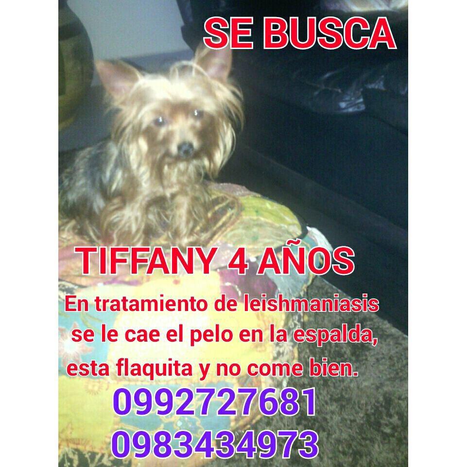 Ayúdennos a encontrar a Tiffany por favor
