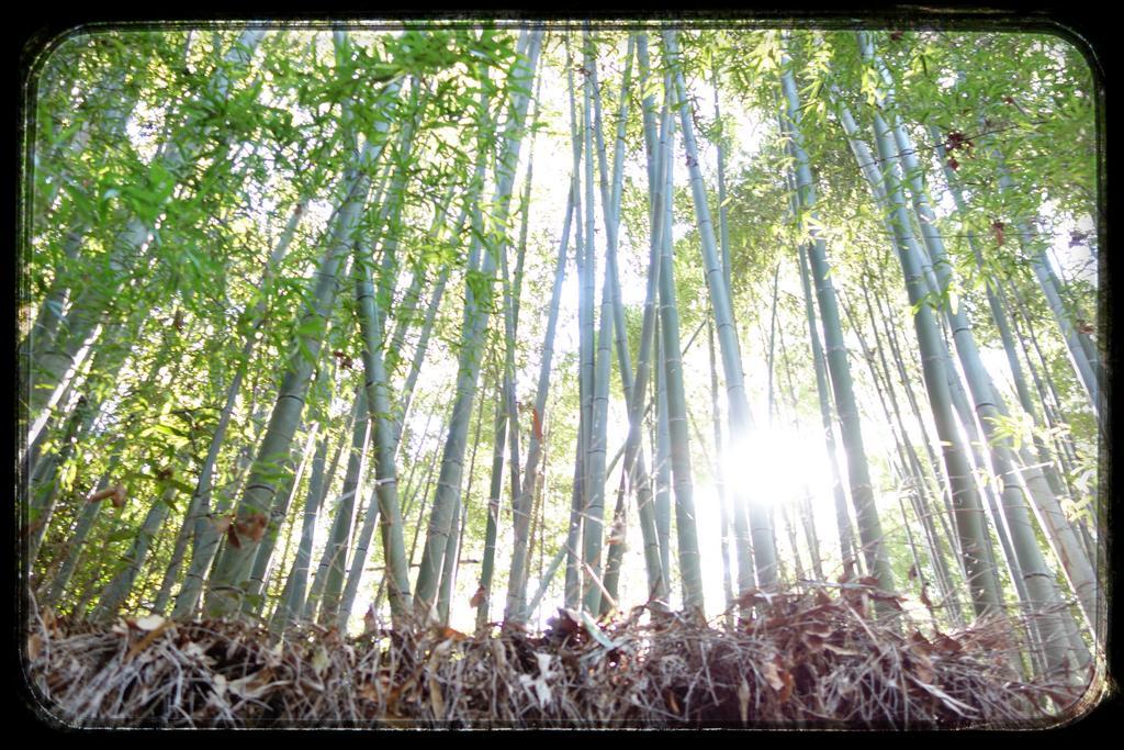 洛西洛北の竹林。こういう竹林をみると、如何に自分たち管理下の体育館裏の竹林がお粗末であるかが分かるなあ。理想的な竹林だ。 https://t.co/9vns1XnRJJ