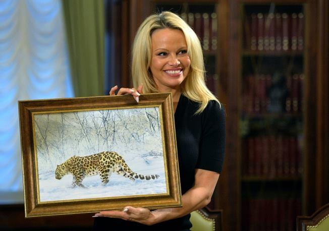 RT @Far_Eastern_Leo: Памела Андерсон стала хранителем дальневосточного леопарда, который получил имя Памела @pamfoundation @action4ifaw htt…