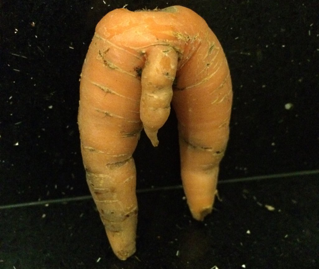 RT @nataliefulstow: Dug up a rude carrot in my veg plot today - well hung too!! #Homegrown #RudeVeg eat you heart out @jamieoliver https://…