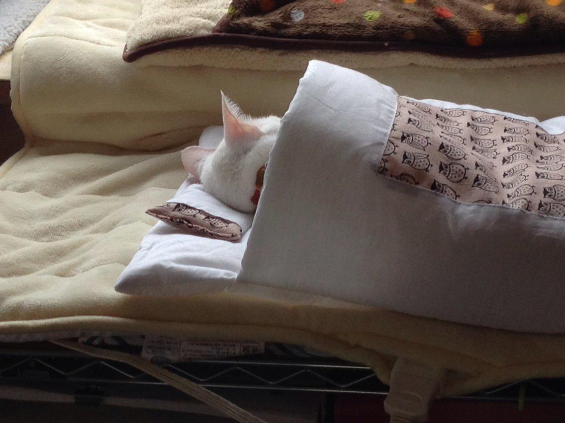 今日は正しく枕を使っています https://t.co/R2yVG0wIZy