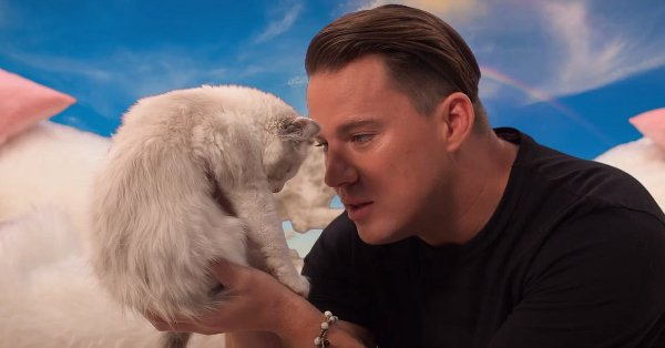 Why is Channing Tatum saying hateful things to a kitten?