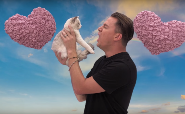 Here's video of Channing Tatum cursing out a cute kitten on Kimmel: 🙀