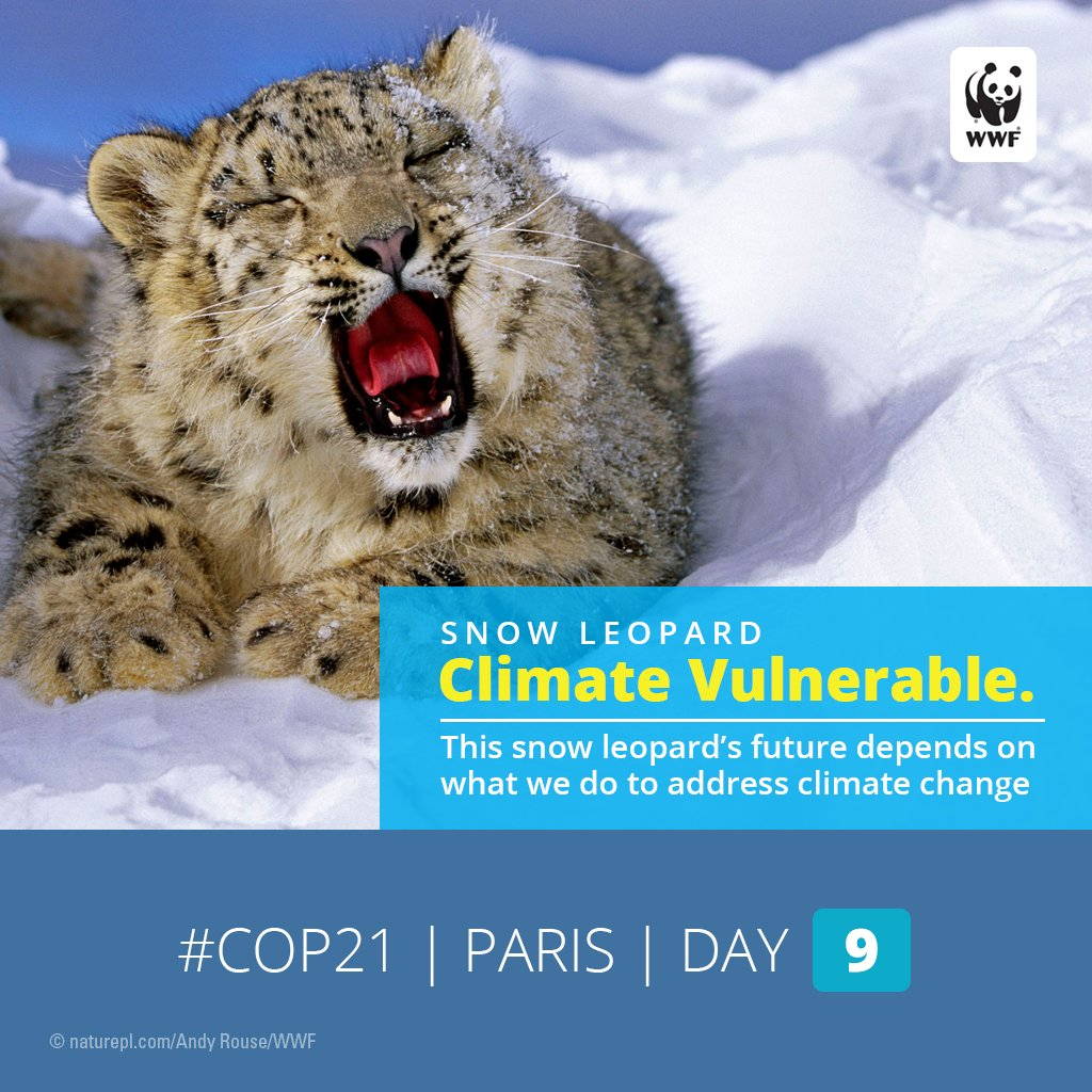 RT @World_Wildlife: How does #climatechange affect wildlife? Find out: https://t.co/vNwaNGpKPv #COP21 https://t.co/ajys9V3ltE