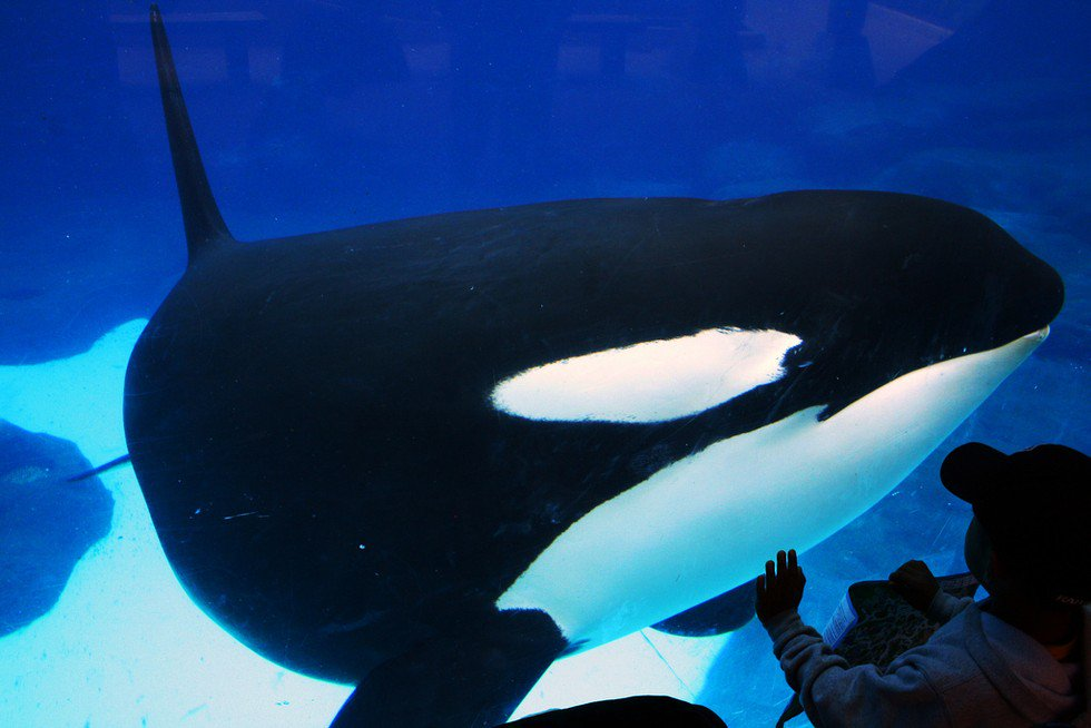 RT @dodo: Ex-SeaWorld employee gives chilling new details about animal and employee mistreatment https://t.co/LeMTawK5kM https://t.co/38Ky4…