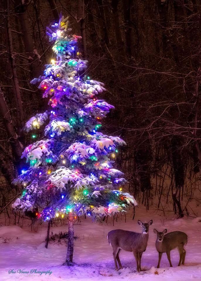 Hi Ladies @VelvetSkye @MichelleBurley1 Beautiful scene with the tree, deer and snow. https://t.co/2C933JUgoT