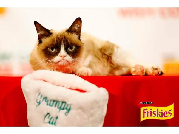 Help @Friskies and @RealGrumpyCat feed a cat in need by tweeting #GiveFriskies NOw thru 12/25! :-) https://t.co/KOiDZMq9Ql