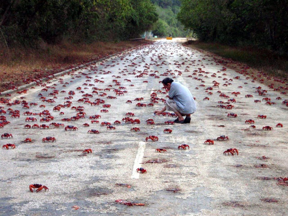 Una vez al año, cangrejos invaden la isla de Navidad. La foto impresiona, el vídeo aún más: https://t.co/OJltQjVfI0 https://t.co/sNGsbIQtop