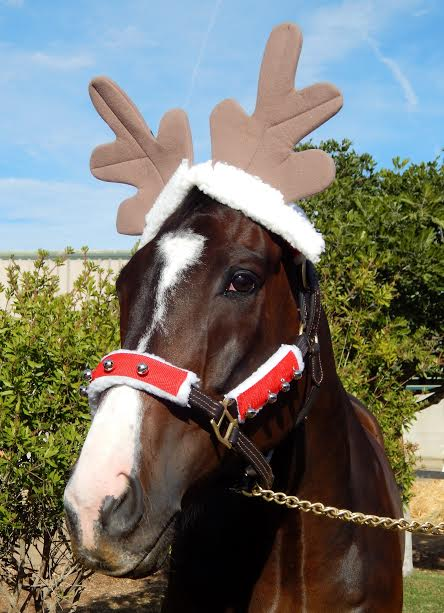On the 1st Day of Christmas the Human gave to me-- a pair antlers to wear.....#SomeonesOnTheNaughtyListAnditsNotMe https://t.co/yN2YoCqM0m