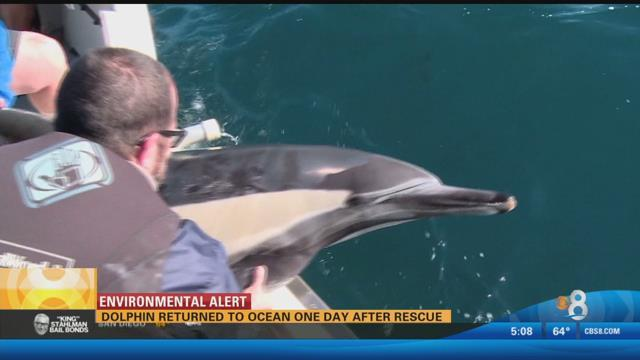 Dolphin returned to ocean one day after rescue https://t.co/skm89g2JwP #sandiego https://t.co/zZuRkmig1Y