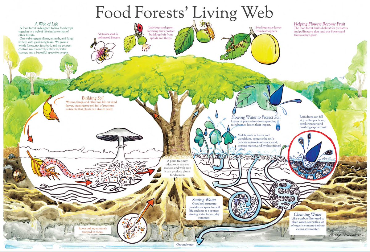 #Food RT @MarleenVanbuel: Creating a food forest, step by step https://t.co/NLETtfxrVT #permaculture #foodforest  https://t.co/3Ylp01GyCg
