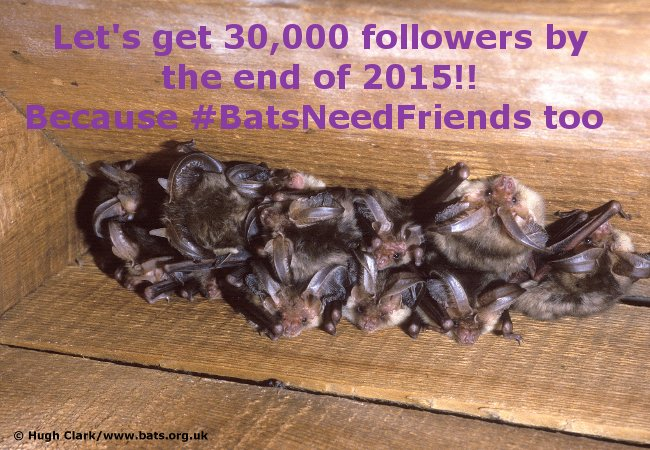 29,648 followers and counting! Will we reach 30K in two weeks? We can with your help! #lovebats #BatsNeedFriends https://t.co/VaJPa41jC2