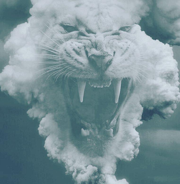 Lion. !! https://t.co/ryN3DrTwNy https://t.co/bKIxYdF7Us