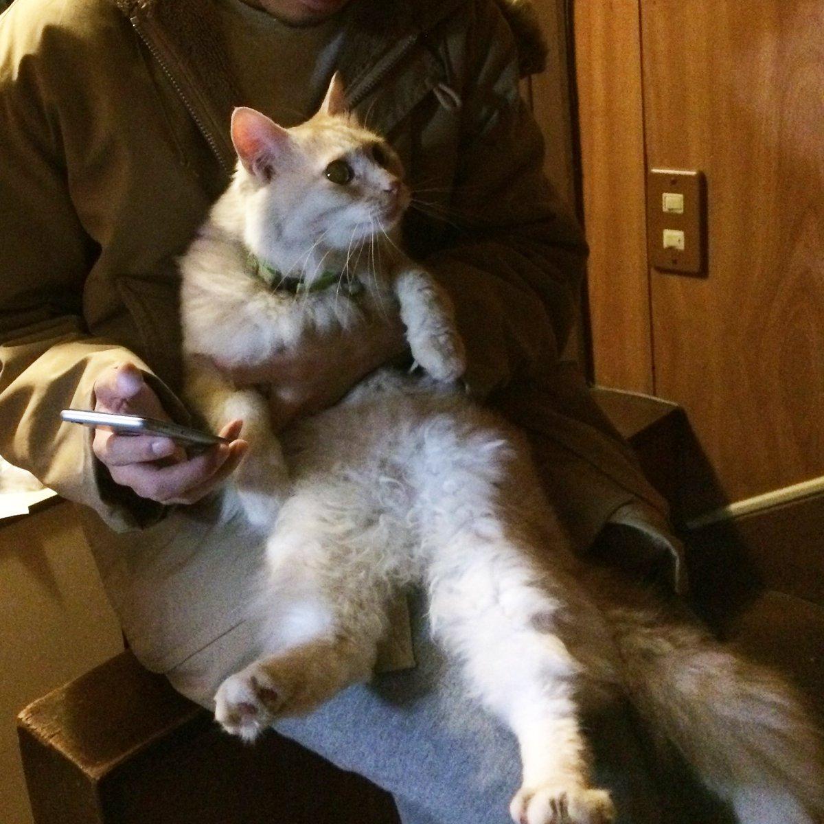 【迷い猫 発見しました!!】22日昼から帰ってこなくなっていた猫 しゃがれ 先ほど無事近所の動物病院で保護されたと電話をいただき、現在帰宅しました! 情報拡散いただいた皆様 ご協力本当に本当にありがとうございました!! https://t.co/ra1NahlxgA