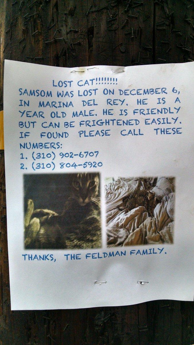 Marina Del Rey, CA...lost cat! @doggiewalkin @BalancedDogs @MarinaDelRey311 @Venice311 @YoVenice https://t.co/xz9VrVvUhx