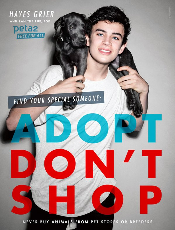 .@HayesGrier wants YOU to help homeless animals!  Find out how: https://t.co/bF8IN0MZCH https://t.co/CF4SlMp2dr