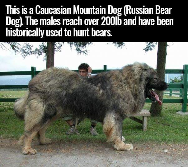 Dog and bear fight
