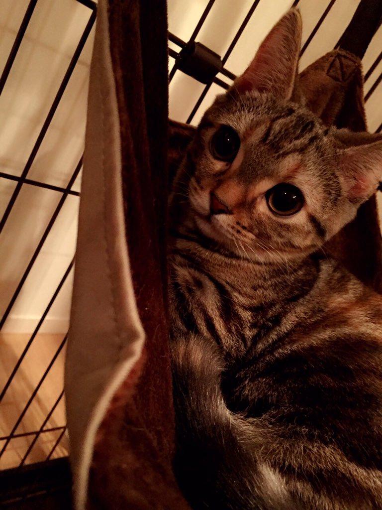 この女子高生のパンツwwwwwwwwwwww [無断転載禁止]©bbspink.com->画像>4657枚
