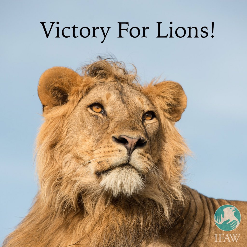 Victory! @usfws grants real protection to African #lions. @action4ifaw led the charge. https://t.co/ju1RvohVuX https://t.co/Of77buBH0M