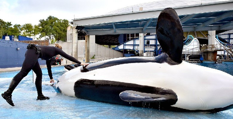 RT @QuadSeaShepherd: Before she died, Unna was being treated for fungal cystitis, an illness commonly caused by the stress of captivity. ht…