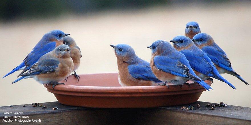 Happy #NationalBirdDay from the original tweeters! https://t.co/ZzGz7UrXRq