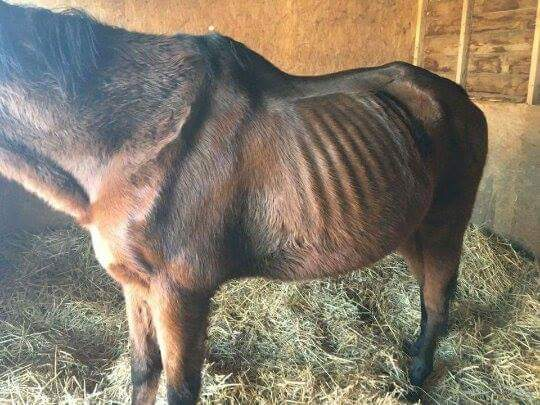 The @RSPCA_official deemed this horse healthy and 'cared for' and this is why I hate them! #FinalFurlong https://t.co/KykLHqMjGq
