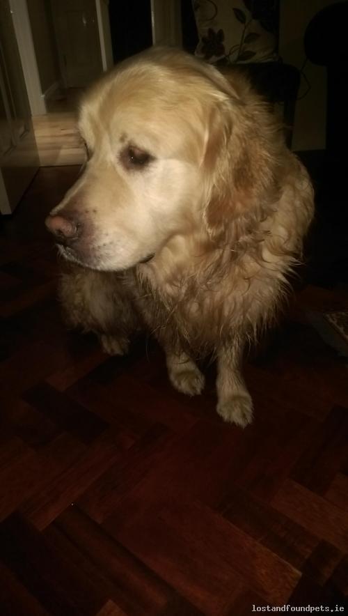 Male dog found on 03/01/2016 in Foxrock Manor, #Dublin 18 - https://t.co/xw4zfhjwk5 #fpie https://t.co/TQDL8IDC05
