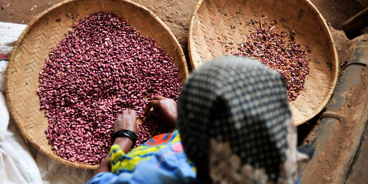 HAPPY NEW YEAR! #DidYouKnow 2016 is the International Year of Pulses? https://t.co/arT0NGWXuF @CGIAR @_PABRA https://t.co/GyTeCPf9Y8