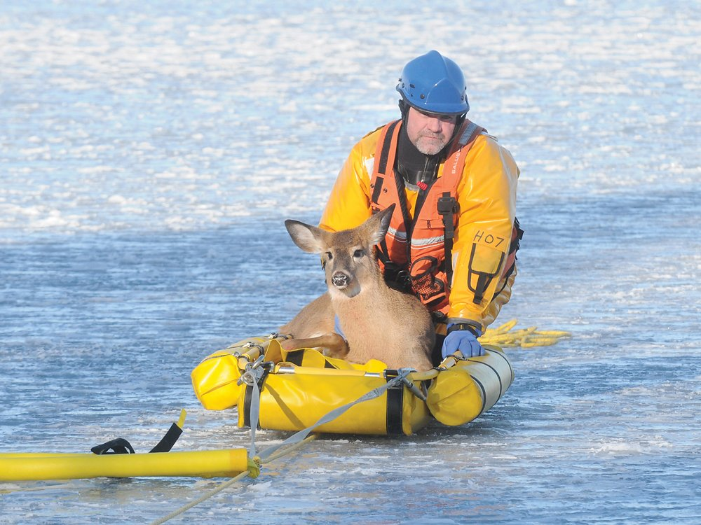 Oh deer! Hamilton firefighters rescue deer stranded on Rice Lake ice.  https://t.co/vXkH0MhWc4 https://t.co/JvHB25FUDE