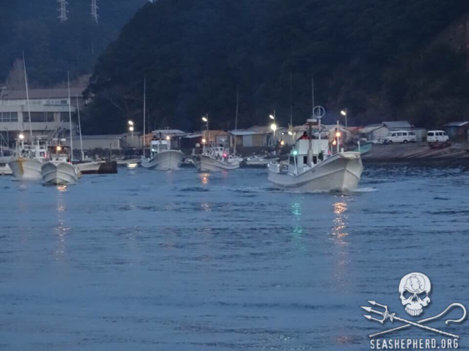 RT @CoveGuardians: 6:55am 12 Banger boats head out to hunt innocent Dolphins. #tweet4taiji #seashepherd https://t.co/bfTM75tSlP