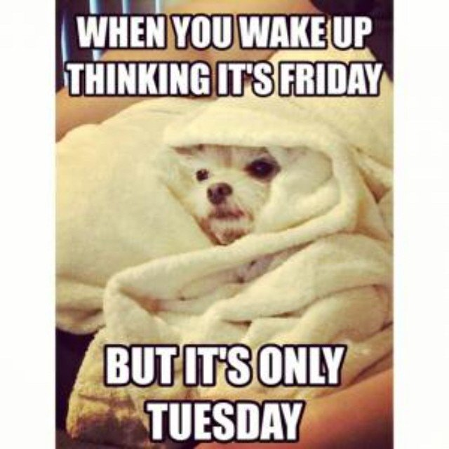 #toocoldTuesday #doglovers #coffee https://t.co/SYC2NAv44t