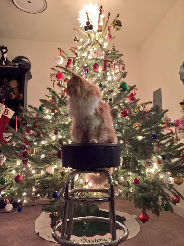 @MouseFaceMeow @Mikey_W_Cat @mattiedog @ShaynaCat @furrrrguson said we could usehis tree #catmaseve https://t.co/cBwxYvYQTo