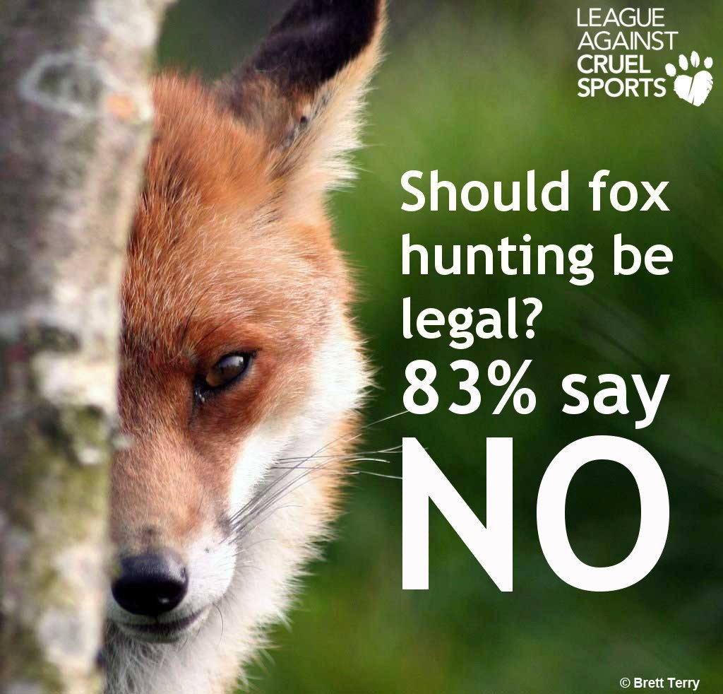 Should fox hunting be legal?   83% say NO  RT if you are one of the 83%  https://t.co/7C512CkccW  #KeepTheBan https://t.co/ZA94HlV0Mq