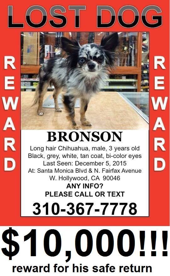 UPDATED: Dog taken in #Weho. Reward now $10,000 for his safe return. Info at https://t.co/a3UOYQbI7Q #LA #LostDog https://t.co/bcmwNQdlML