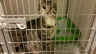 Deze kat is zondag achtergelaten in een warenhuis in #Alkmaar. Weet u wie de eigenaar is? https://t.co/IJ3glKQhYq https://t.co/7ia0zQeTBd
