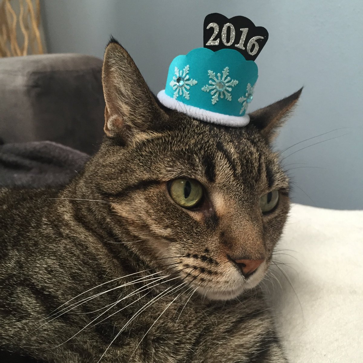 LATEST GIVEAWAY!https://t.co/WDep65ZpBP Win litter for a year and more! #NYETidyCatsHats @Purina #sponsored https://t.co/hB4TzTJJbB