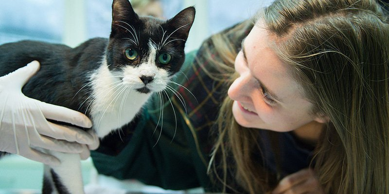 Family cat missing for 7 years returns for Christmas