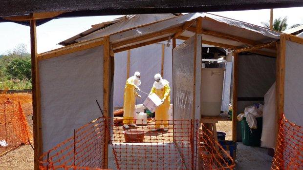 WHO declares Guinea free of Ebola transmission
