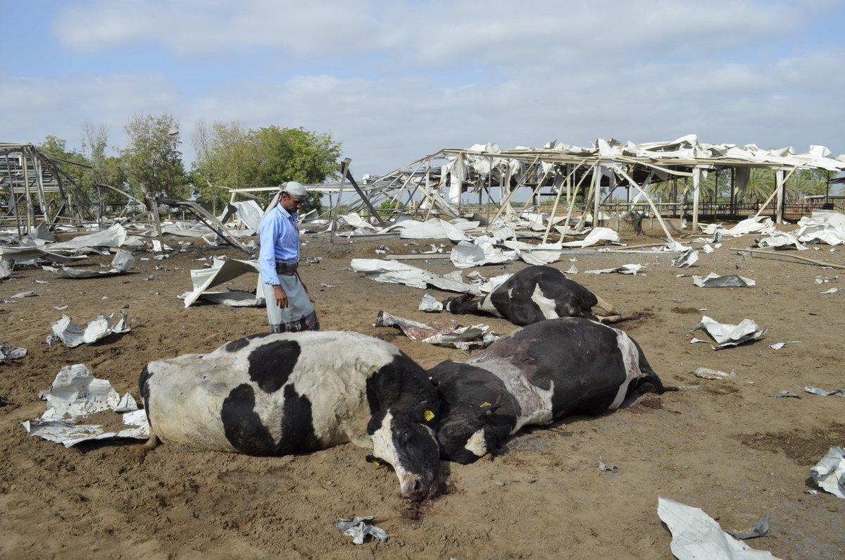 Cows killed by Saudi-led air strike at dairy farm in Bajil in Yemen, Jan 2. Reuters/Abduljabbar Zeyad https://t.co/WUh2rSJptl