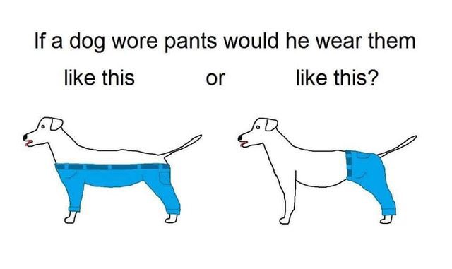 Asking the important questions https://t.co/ThyrsglmJ4