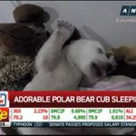 Image of bear from Twitter