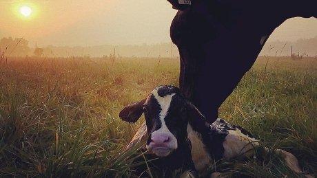 #Farm365 Twitter project called success by Ontario farmer https://t.co/16nVFGMl8K https://t.co/Eopb7Vh2Yn