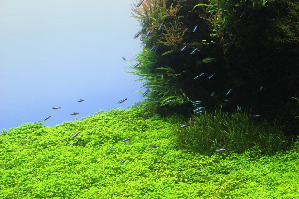 青だまり #新年だし熱帯魚載せたらブァーって拡散されてフォローがいっぱい来るって聞いた https://t.co/kvnWEYhuI8