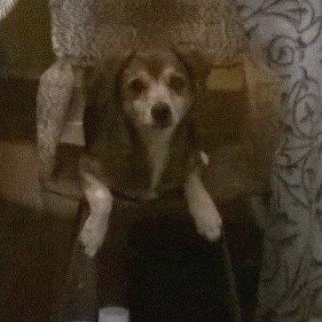 El perrito de mi prima se escapo anoche por miedo a los fuegos artificiales en El Naranjal Naguanagua @ASOGUAU https://t.co/bDFWeOX8Fz
