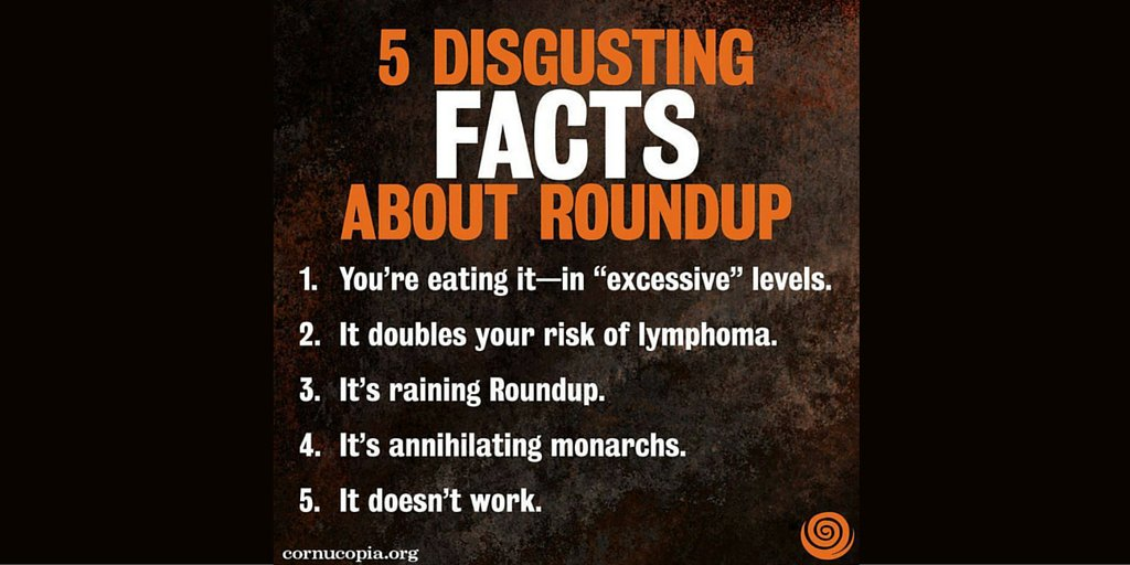 Reasons why you should NOT to reach for #RoundUp. Just say NO, please. https://t.co/1O0VZ4lyTf via @Cornucopia_Inst https://t.co/BT9YH7HHDa